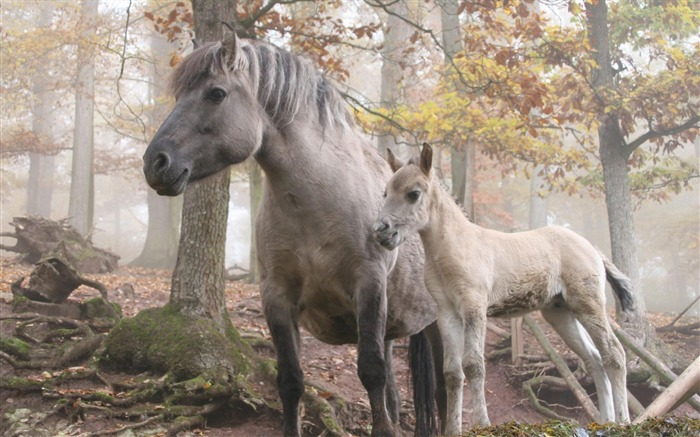 horse forest trees-Animal photo wallpaper Views:4655