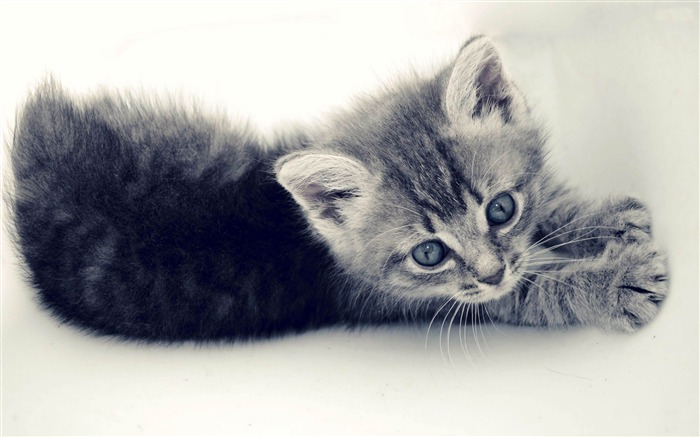 kitten-Animal photography wallpaper Views:5847