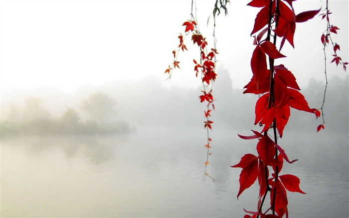 leaf red-natural landscape wallpaper Views:8697