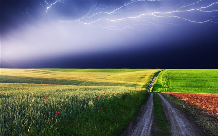 lightning red flowers road color-natural landscape wallpaper Views:7182