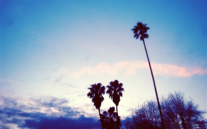 palm trees-Aero Creative wallpaper Views:4696