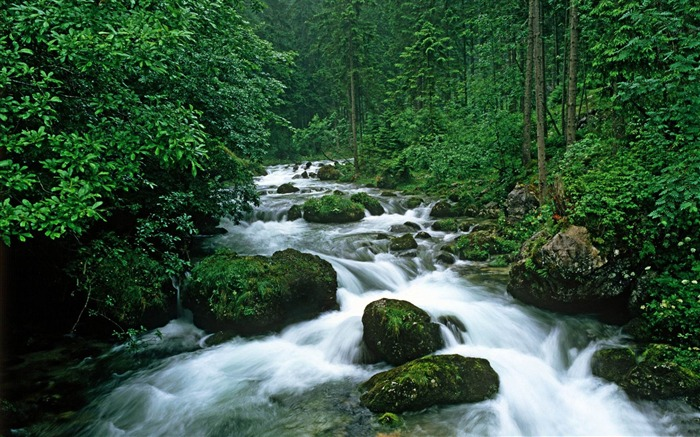 peaceful forest-rivers Landscape Wallpaper Views:13379 Date:6/20/2012 10:06:33 PM