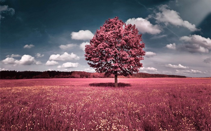 pink field-Aero Creative wallpaper Views:45093