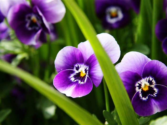 purple flower -Flowers photography Wallpaper Views:4101