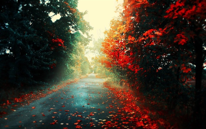 red trees-Autumn landscape wallpaper Views:12461
