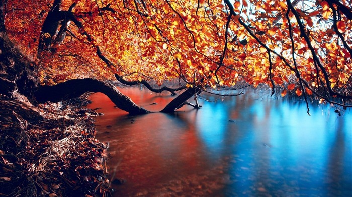 tree branches over the lake-Autumn landscape wallpaper Views:4012