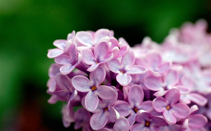 violet flowers-Flowers photography Wallpaper Views:4133