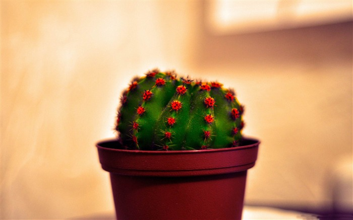 Cactus-flowers photography wallpaper Views:6185