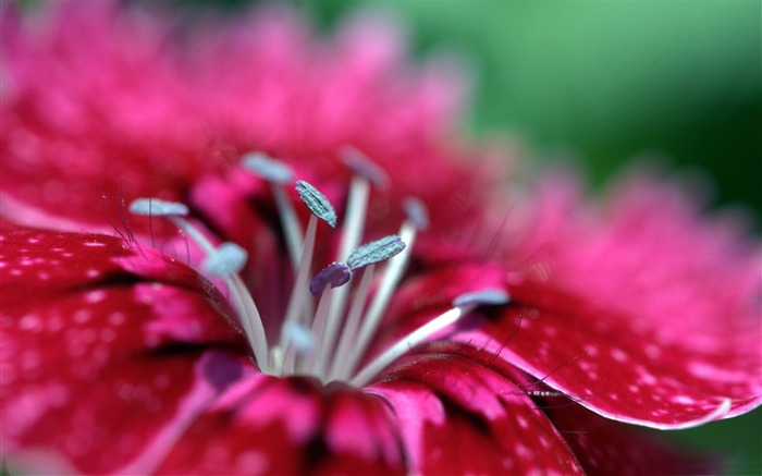 Macro photography theme desktop wallpaper Views:13413