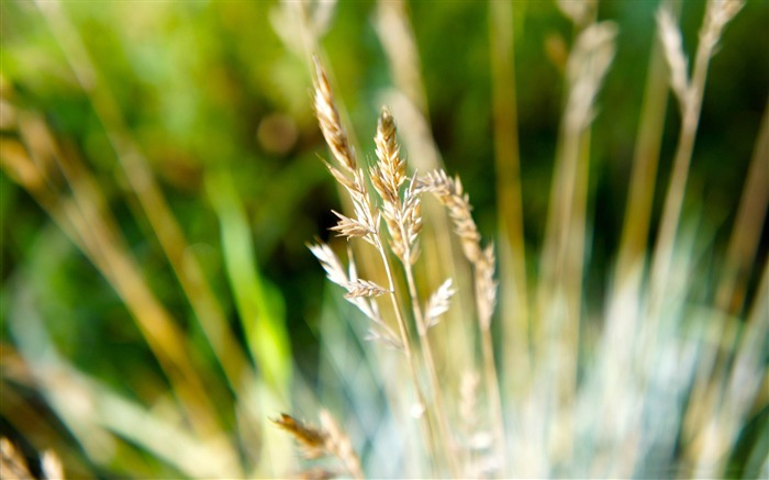 dry grass-Macro photography wallpaper Views:4854