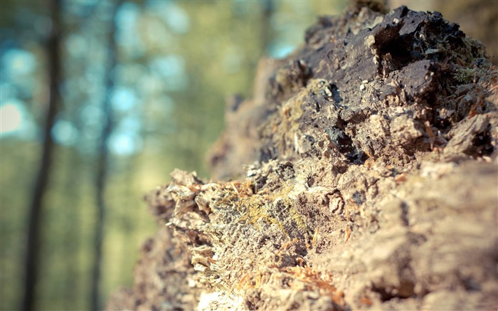 fossilized wood-Macro photography wallpaper Views:5170