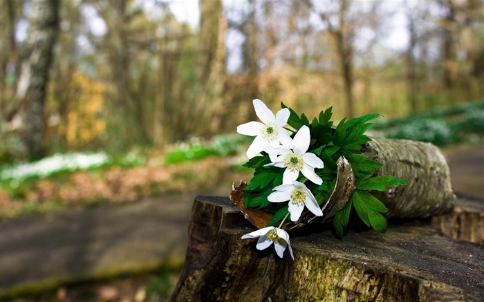 spring forest flowers-flowers photography wallpaper Views:7041