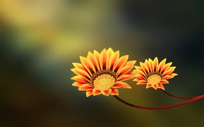 two flowers-flowers photography wallpaper Views:2786