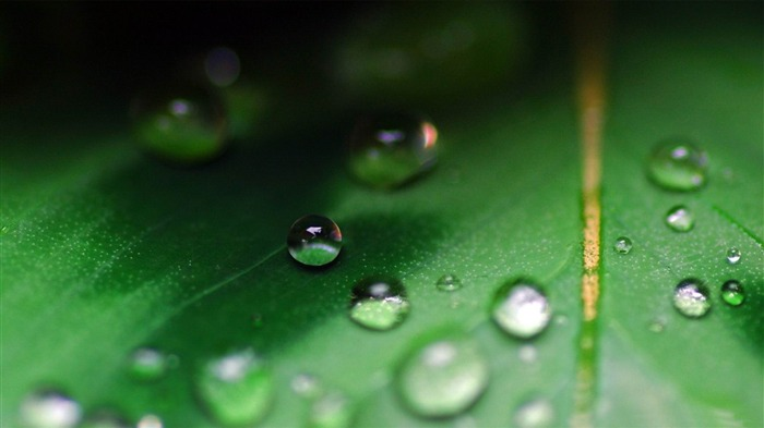 water drops on leaf-Macro photography wallpaper Views:2860