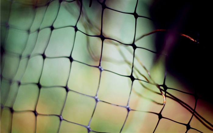 wire fence -Macro photography wallpaper Views:5263