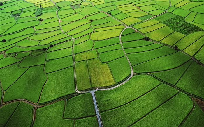 The green rice fields of the low-altitude aerial-Mac OS Wallpaper Views:45178