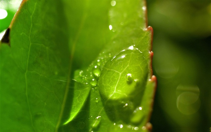 drops on leaves-Plant close-up wallpaper Views:3506