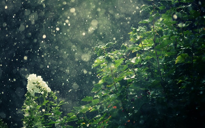 rain-Summer landscape wallpaper Views:25070