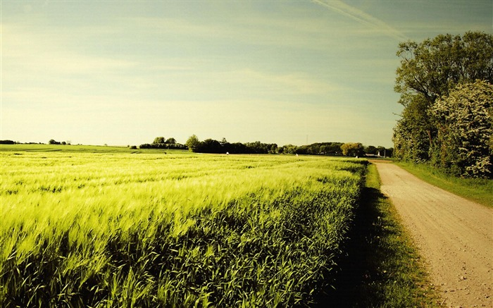 road field-Summer landscape wallpaper Views:7025