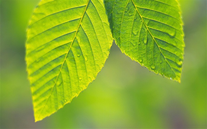 tree leaves-Plant close-up wallpaper Views:10204
