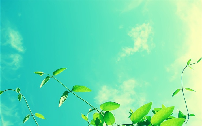 vines and sunny sky-Summer landscape wallpaper Views:6717