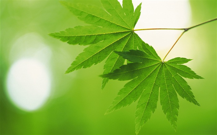 Fresh green leaves theme Desktop Wallpapers Views:9475