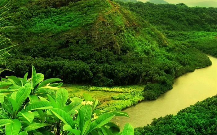 Green Mountain Trees River-plants photography wallpaper Views:10037