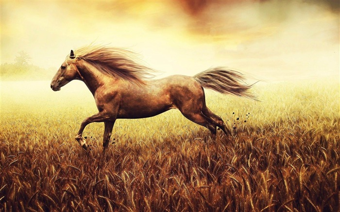Horse Run Cornfield-Natural animal wallpapers Views:11537