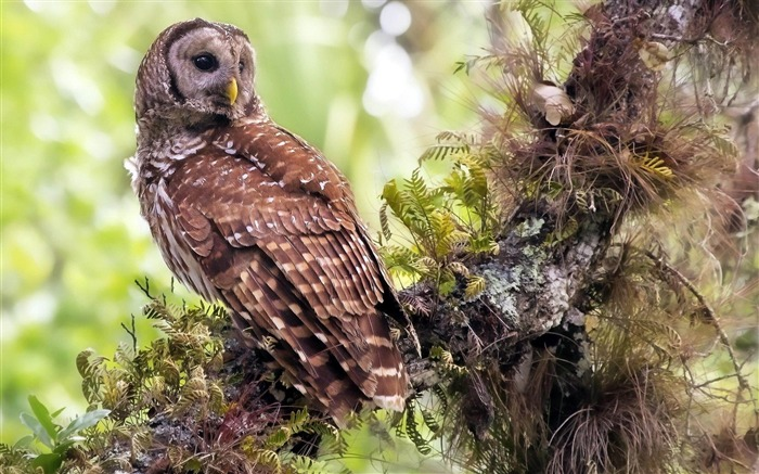 Owl Forest-Natural animal wallpapers Views:9787