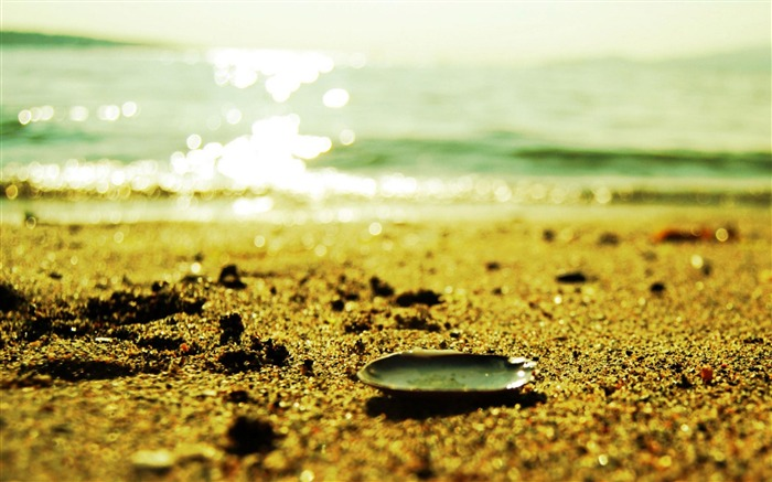 Shell On Sand-Nature Wallpapers Views:5563