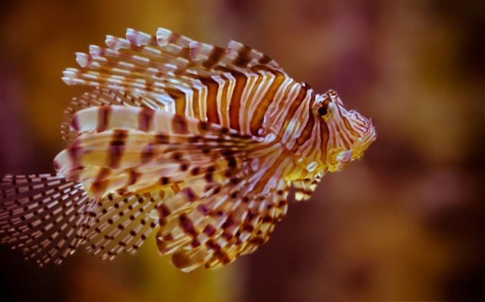 fish atlantis paradise island-Natural animal wallpapers Views:7097