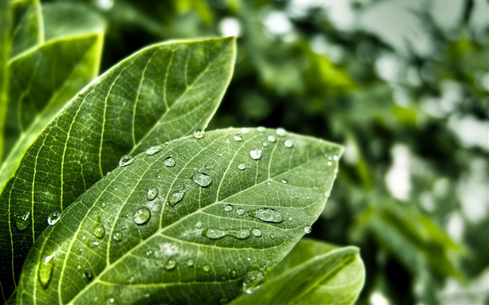 freshness leaves-plants photography wallpaper Views:5366