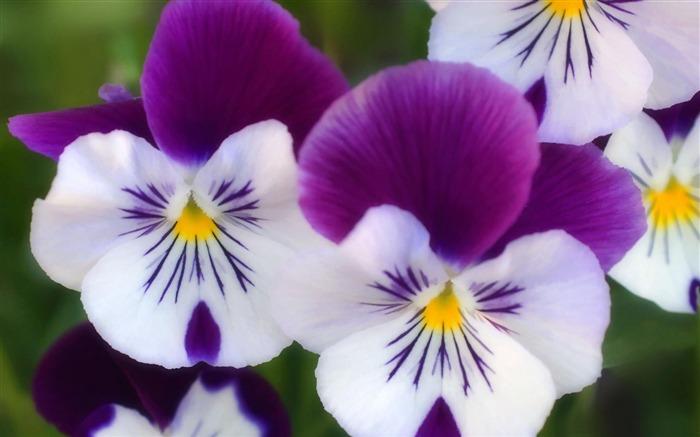 Automne Frais Flower Photographie Fond D écran Liste D