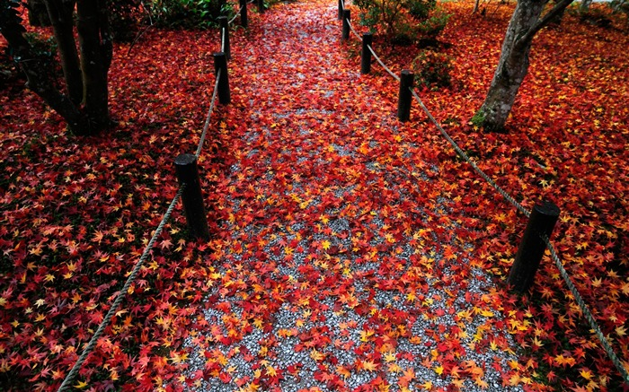 All the way to the leaves-Enkoji Temple Autumn wallpapers Views:5734 Date:10/17/2012 6:09:05 PM