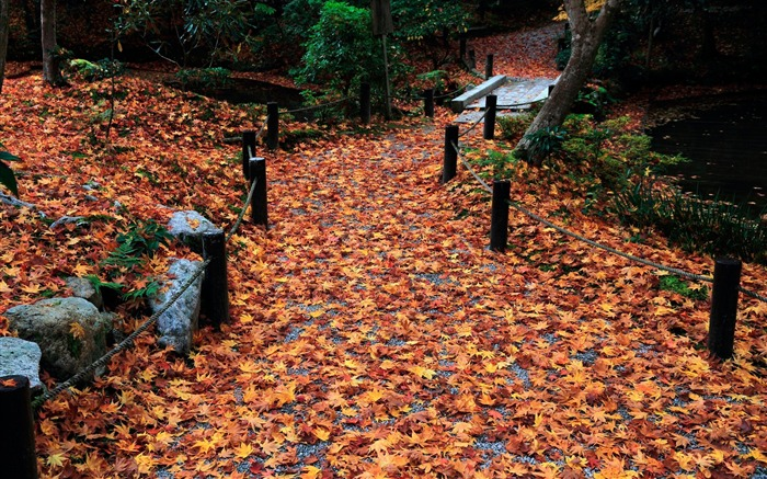 Alley-Enkoji Temple Autumn wallpapers Views:6308 Date:10/17/2012 6:06:59 PM