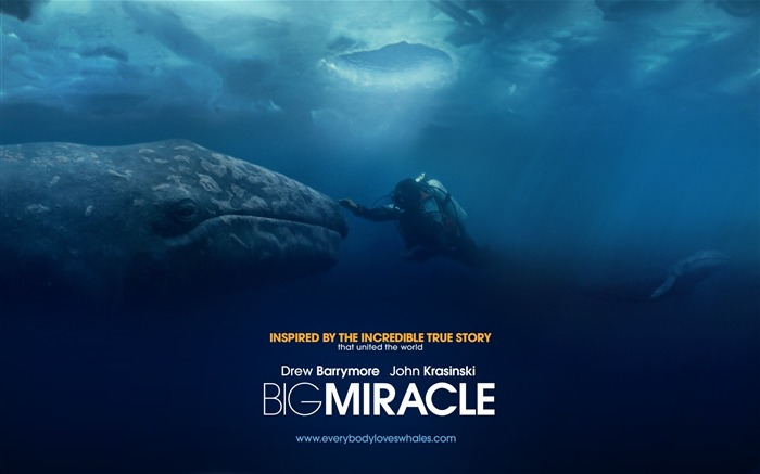 Big Miracle 2012 Movie HD Desktop Wallpapers 04 Views:3627