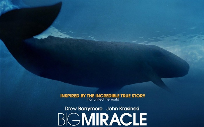 Big Miracle 2012 Movie HD Desktop Wallpapers 07 Views:4240