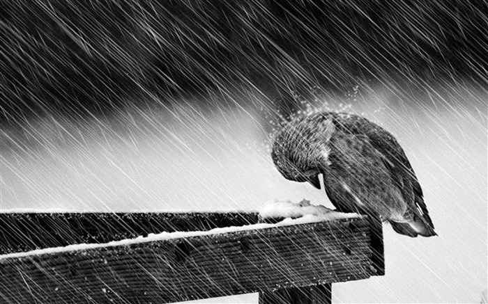 Birds Winter-Animal Widescreen Wallpaper Views:13608
