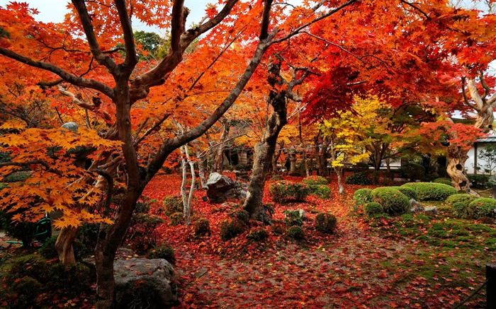 Colorful world-Enkoji Temple Autumn wallpapers Views:15754 Date:10/17/2012 6:01:26 PM