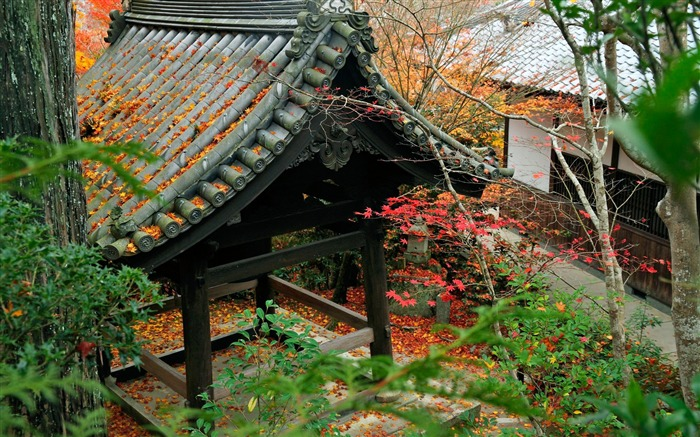 Corner of the courtyard-Enkoji Temple Autumn wallpaper Views:6409 Date:10/17/2012 5:45:08 PM