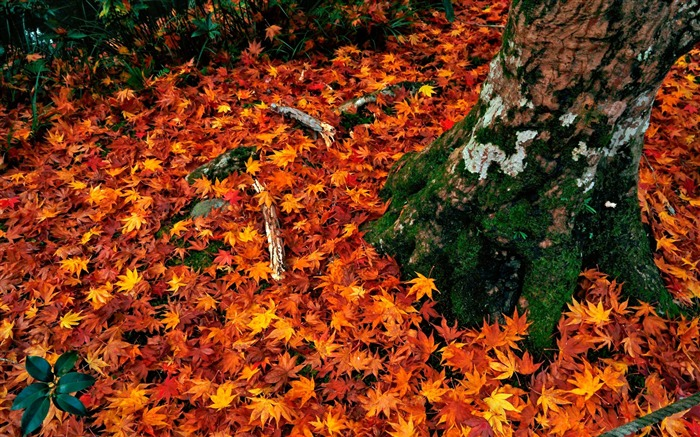 Covered with red leaves-Enkoji Temple Autumn wallpaper Views:5829 Date:10/17/2012 5:43:38 PM