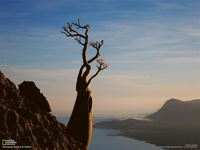 Desert Rose Socotra-National Geographic photography wallpaper Views:8750