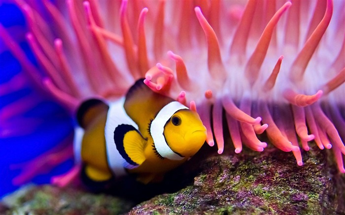 Ocean Bottom Fish Yellow-animal photography wallpapers Views:7989