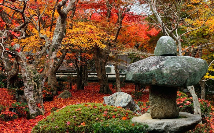 Red Maple Leafs-Enkoji Temple Autumn wallpapers Views:4357 Date:10/17/2012 6:12:31 PM
