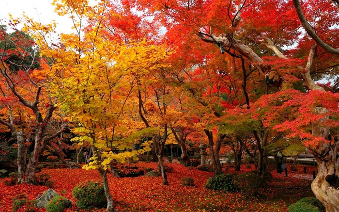 Red and yellow maple-Enkoji Temple Autumn wallpapers Views:40282 Date:10/17/2012 6:02:05 PM