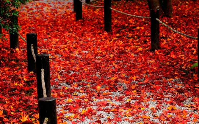 Red fallen leaves of the Road-Enkoji Temple Autumn wallpapers Views:12307 Date:10/17/2012 6:02:50 PM