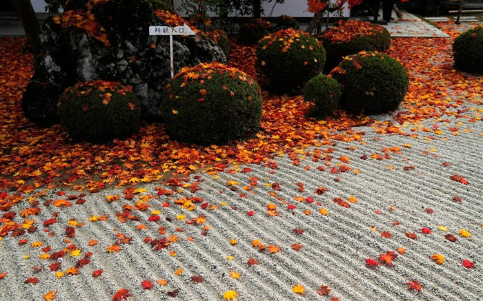 Red leaves on the road-Enkoji Temple Autumn wallpaper Views:5611 Date:10/17/2012 5:23:54 PM