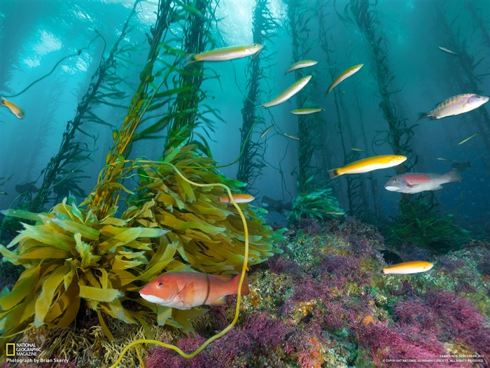 Seamount Cortes Bank-National Geographic photography wallpaper Views:5249
