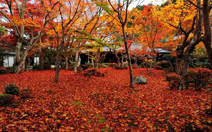 Small courtyard-Enkoji Temple Autumn wallpapers Views:8130 Date:10/17/2012 6:07:47 PM