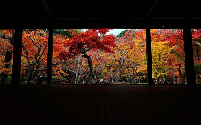 The 10 cattle Court-Enkoji Temple Autumn wallpapers Views:8290 Date:10/17/2012 6:05:49 PM
